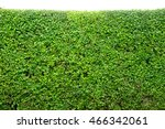 green hedge or green bush... | Shutterstock . vector #466342061