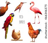 set of red birds  hummingbird ...   Shutterstock . vector #466346375