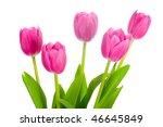 five pink tulips bouquet | Shutterstock . vector #46645849