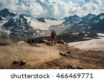 the mountains. hikers in the... | Shutterstock . vector #466469771