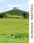 Colmer's Hill Near Village Of...