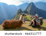tourist and llama sitting in... | Shutterstock . vector #466511777