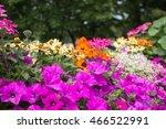 Soft Focus Blooming Flowers In...