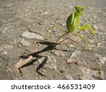 green mantis is posing for the... | Shutterstock . vector #466531409