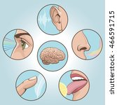 a set of six anatomical images. ... | Shutterstock .eps vector #466591715