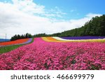 colorful flower fields in... | Shutterstock . vector #466699979