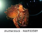 octopus in the light of... | Shutterstock . vector #466933589