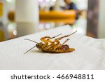 dead cockroaches on white ... | Shutterstock . vector #466948811