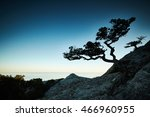 tree and sea at sunset. crimea... | Shutterstock . vector #466960955