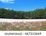 colorful flower fields in... | Shutterstock . vector #467213669