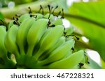 Tropical Fruits Bananas Bunch...
