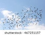 flying birds starlings | Shutterstock . vector #467251157