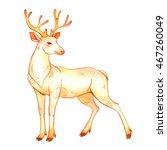 isolated watercolor deer on... | Shutterstock . vector #467260049