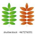 two vector rowan  leaves on a...   Shutterstock .eps vector #467276351