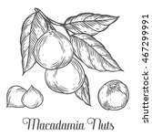 macadamia nut oil  fruit  berry ...   Shutterstock .eps vector #467299991