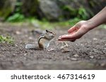 The Chipmunk Eats Seeds From M...