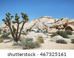 Boulders And Joshua Tree In...