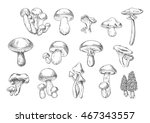 Forest Mushrooms Sketch Of...