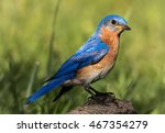 closeup portrait of male... | Shutterstock . vector #467354279