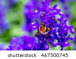 Small photo of Purple Ajuga Flower with a honey bee
