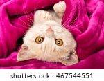 Little Cat Lying On Back