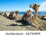 camels in dahab  egypt | Shutterstock . vector #46754899