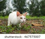 Stock photo cat hunting looking crouch 467575007
