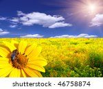 Bee On The Flower In The Yello...