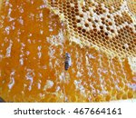 the photo shows the nectar...   Shutterstock . vector #467664161