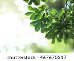 green leaves of tree background | Shutterstock . vector #467670317