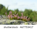 view on uncultivated wild...   Shutterstock . vector #467753417
