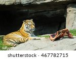 Tiger At Feeding Time