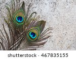 peacock feather with copy space