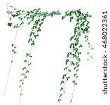 wild climbing vine  cayratia... | Shutterstock . vector #468022361