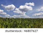 Corn stalks and puffy clouds on a farm in Southern Wisconsin