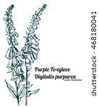 Purple Foxglove Or Common...