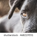 Black Dog Face Close Up With...