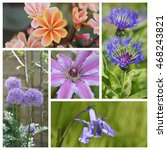 closeup of various flower in a...