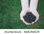 handful of wild blackberries... | Shutterstock . vector #468246029