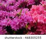 pink royal azalea in south korea | Shutterstock . vector #468305255