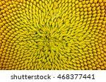 Macro Sunflower Background