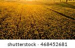 Field With Blooming Sunflowers...