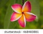 Five Petal Pink Flower...