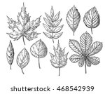 vector autumn drawing leaves... | Shutterstock .eps vector #468542939