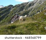Small photo of Sheep on alpine glacier mountains and gauli house on the Alpine glacier mountains in switzerland