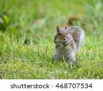 Portrait Of Cute Grey Squirrel...