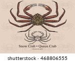 Snow Crab  Queen Crab . Vector...