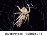 close up spider on the web | Shutterstock . vector #468886745