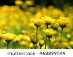 yellow flower garden   yellow... | Shutterstock . vector #468899549