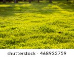 summer green | Shutterstock . vector #468932759